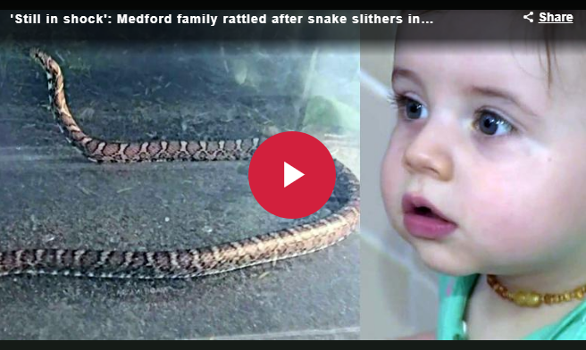 Family rattled after snake slithers into home; bites infant
